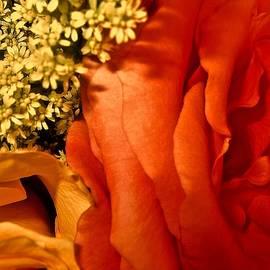 Elizabeth Tillar - Passion for Autumn
