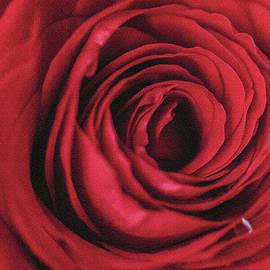 Passionate feelings by Svetlana Iso