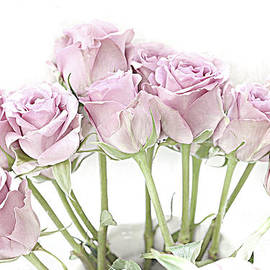 Pastel Pink Roses - Botantical Roses Floral Home Decor, Shabby Chic Pink Roses - Kathy Fornal