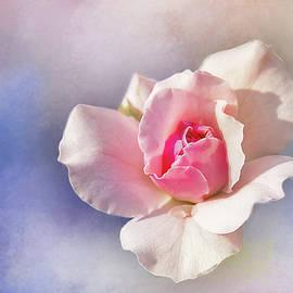 Terry Davis - Pastel Rose Delight