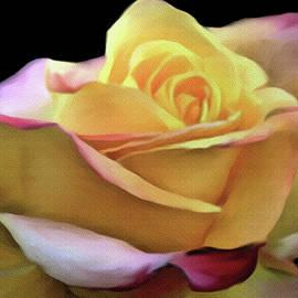 Dennis Buckman - Pastel Yellow Rose Canvas Proofed