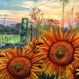 Debra and Dave Vanderlaan - Pasture Fence in Sunflowers