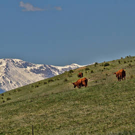 Pasture With a View by Alana Thrower