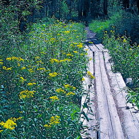 Path 4 by Pamela Cooper