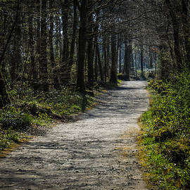 Path In The Woods Of Ireland's Coole Park by James Truett