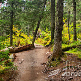 Path Through The Mt. Rianier Forest by Adam Jewell