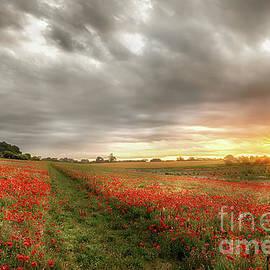 Path through wild poppies at dawn by Simon Bratt Photography LRPS