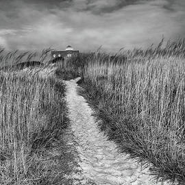 Tom Gari Gallery-Three-Photography - Pathway Black and White