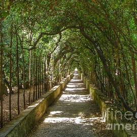 Pathway in Florence Italy by Anne Sands