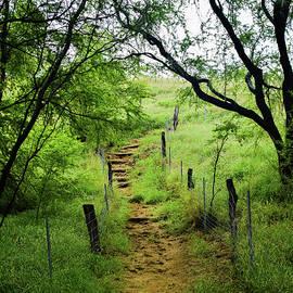 Pathway Of Life by Pamela Walton