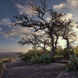 Pathway On Top Of Enchanted Rock by Todd Aaron