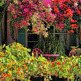 HH Photography of Florida - Patio Garden With Cascading Bougainvillea And Nasturtiums