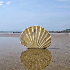 Susie Peek -  Patterns In Nature - Charmouth