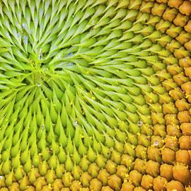 Patterns by Ray Silva