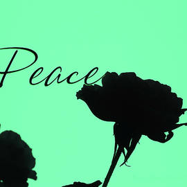 Peace Rose Silhouette - Original Floral Photographic Art and Design - Peaceful Images by Brooks Garten Hauschild