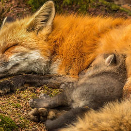 Peaceful Dreams by Steve Dunsford
