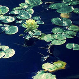 Peaceful Pond by Sandra Gallegos