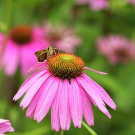 Marianne Campolongo - Peaceful Skipper Butterfly