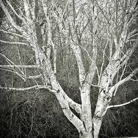 Carol Groenen - Peaceful Winter Tree in Black and White