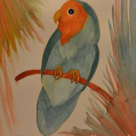 Maria Urso - Peach-Faced Lovebird