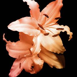 Johanna Hurmerinta - Peach Lilies