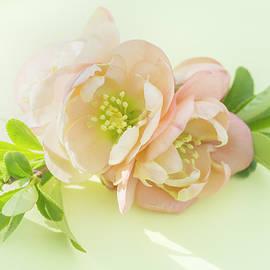 Iris Richardson - Peach Quince Flowers