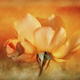 Terry Davis - Peach Rose on Texture