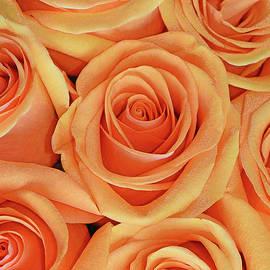 Regina Geoghan - Peach Rose Bouquet