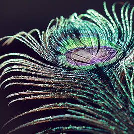 Peacock Feather With Dark Background by Angela Murdock