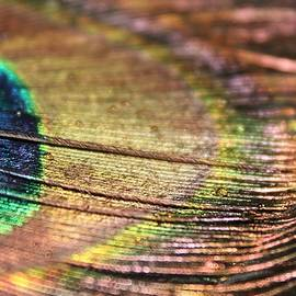 Peacock Macro by Lkb Art And Photography