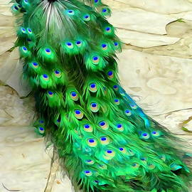 Peacock Plumes by Ed Weidman