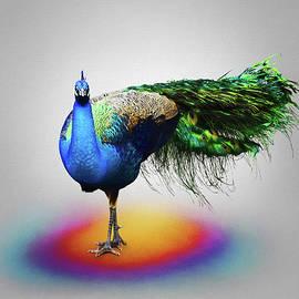 Steven Michael - Peacock Pose