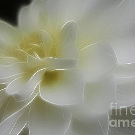 Pearly White Dahlia  by Vickie Emms