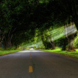 Pecan Alley Rays - Arkansas - Landscape by Jason Politte