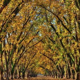 Reid Callaway - Pecan Canopy Pecan Pie Orchard  Art