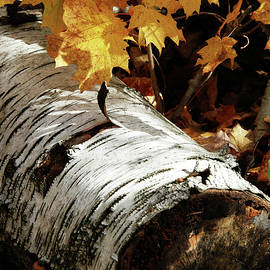 Peeling Birch Log by Kathy Carlson