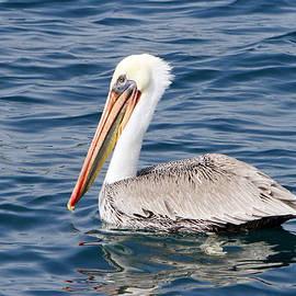 Pelican at Sea by Shoal Hollingsworth