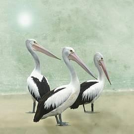 Pelican Beach Long by David Dehner