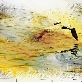 Athala Carole Bruckner - pelican in flight