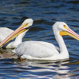 Dawn Currie - Pelican Pair