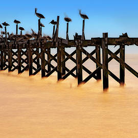 Pelican Pier Near Pass Christian - Mississippi by Jason Politte
