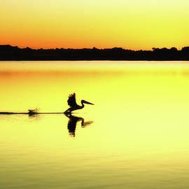 Pelican Re Make by Grant Petras