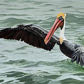 Jimmie Bartlett - Pelican Splash