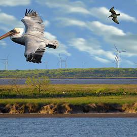 Pelican Turbine Chase by Doug LaRue