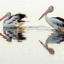 Pelicans at Dusk by Werner Padarin
