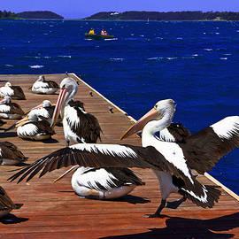 Pelican's Landing 2 Touchdown by Miroslava Jurcik