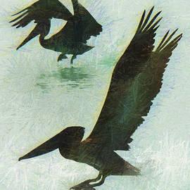 Pelicans by Rob Huntley