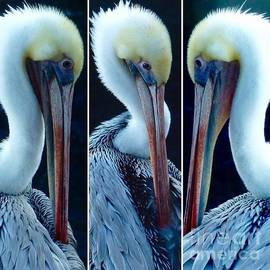 Pelican's Turn  by Susan Garren