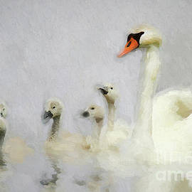 Darren Fisher - Pen and her Cygnets