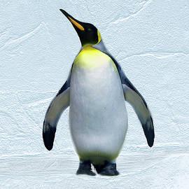 Steve Karol - Penguin